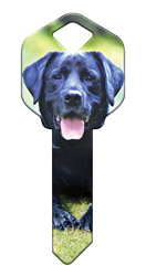 HK59 - Labrador Retriever happy, key, labrador, lab, retriever, dog, puppy, keys, kw, sc1, wr5