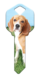 HK63 - Beagle happy, key, beagle, dog, puppy, keys, kw, sc1, wr5