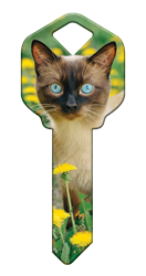 HK64 - Siamese happy, key, siamese, cat, kitten, paws, keys, kw, sc1, wr5