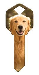 HK61 - Golden Retriever happy, key, golden, retriever, dog, puppy, keys, kw, sc1, wr5